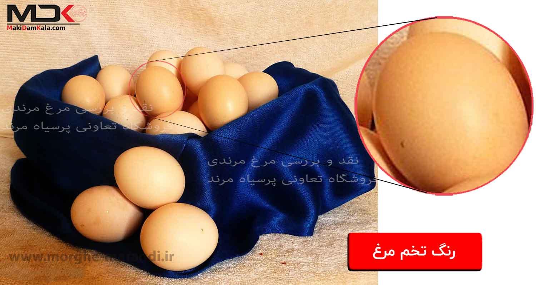 نقد و بررسی مرغ مرندی رنگ تخم مرغ