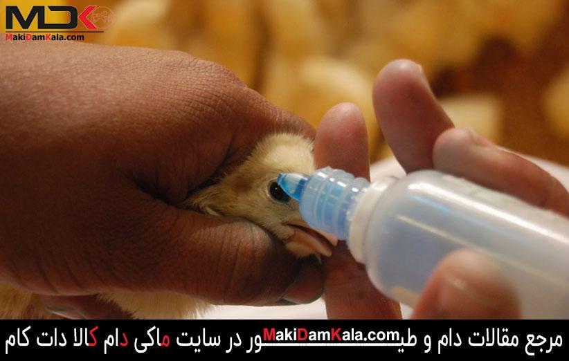 واکسیناسیون علیه بیماری نیوکاسل