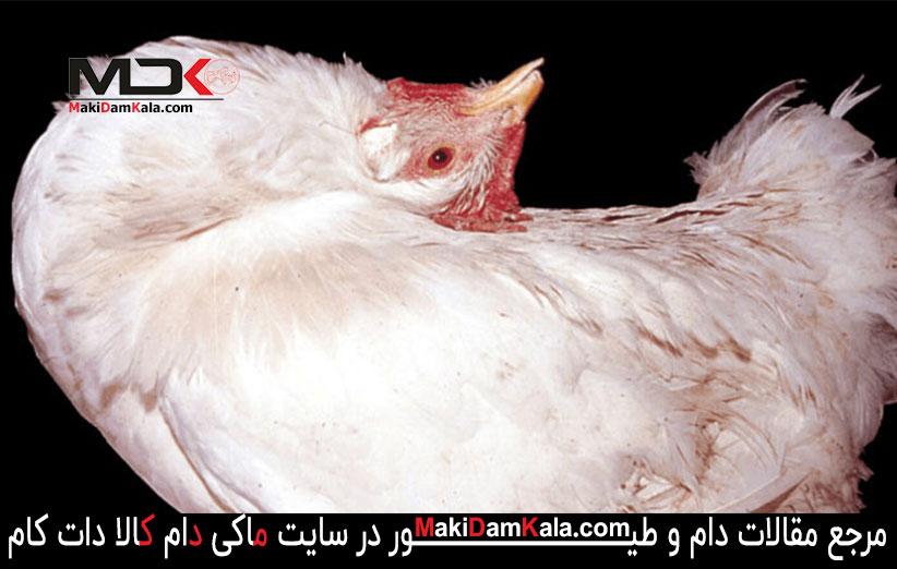 بیماری نیوکاسل در پرندگان