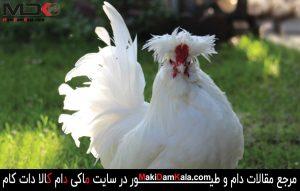 معرفی نژاد مرغ و خروس سلطان