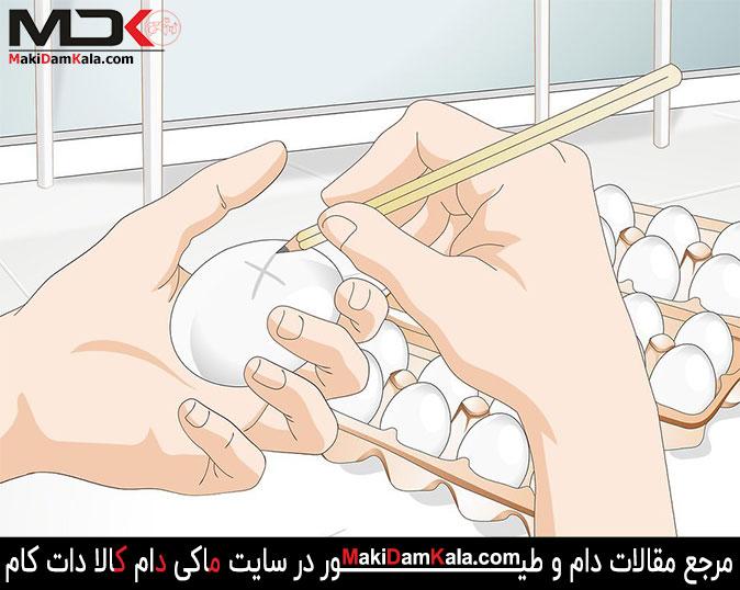 با استفاده از مداد جهت های مختلف تخم مرغ را علامت گذاری کنید