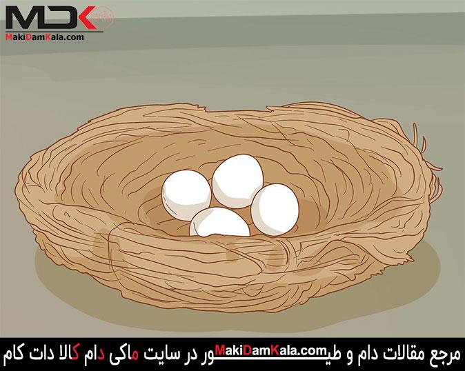 تخم مرغها را برای مدّت 14 تا 21 روز تحت نظر داشته باشید
