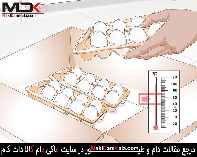 تخم مرغ های نطفه دار را تهیّه نمایید