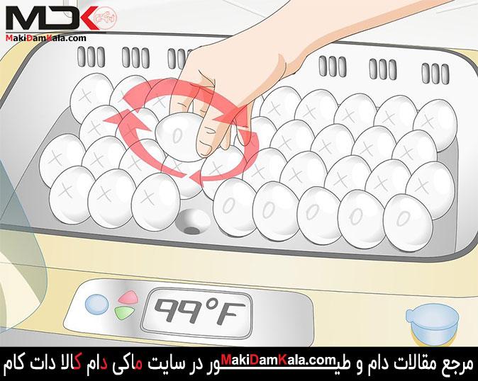 تخم مرغ ها را حدّاقل 3 بار در روز پچرخانید