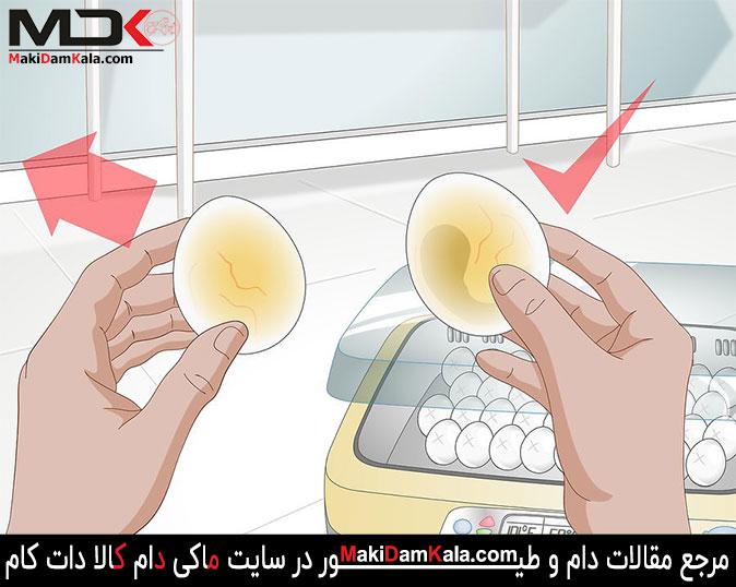 جدا کردن تخم های بی نطفه