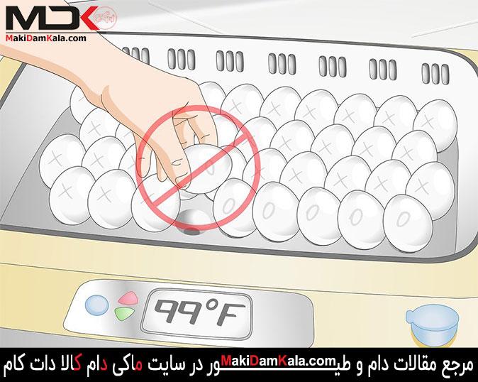در 3 روز آخر فرآیند جوجه کشی چرخاندن تخم مرغ ها را متوقّف کنید