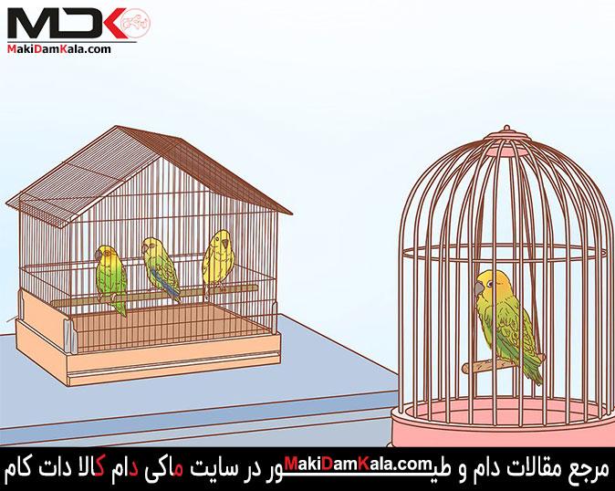 پرنده های ماده ی خود را از پرنده های نر جدا کنید