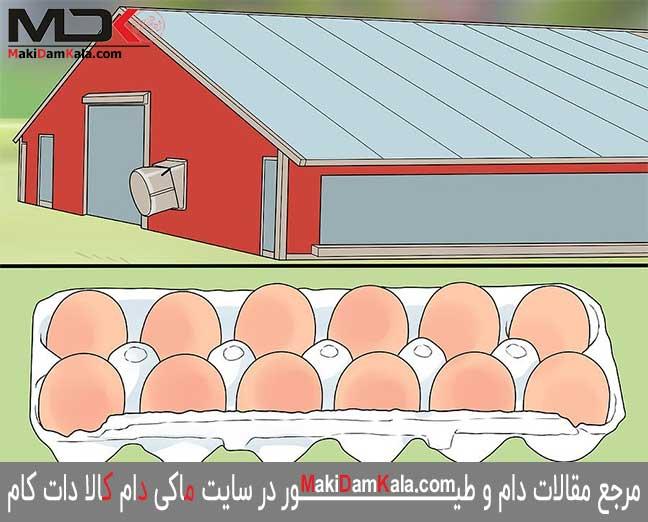 تخم مرغهای نطفه دار را از افراد متخصّص تهیّه کنید